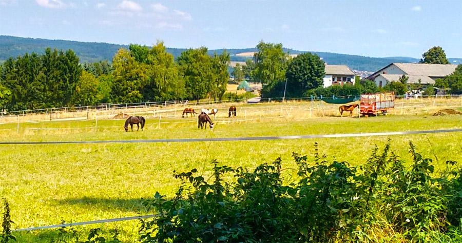Лошади и жара