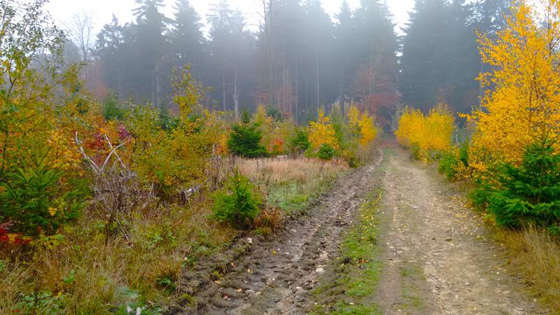 Осенний туман в лесу