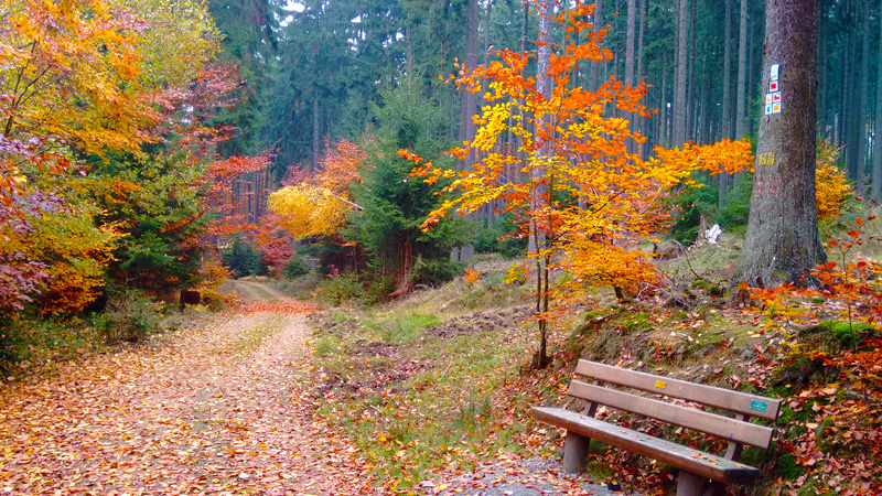 Осень Лес Картинки