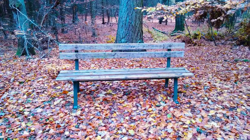 Скамейка в осеннем лесу