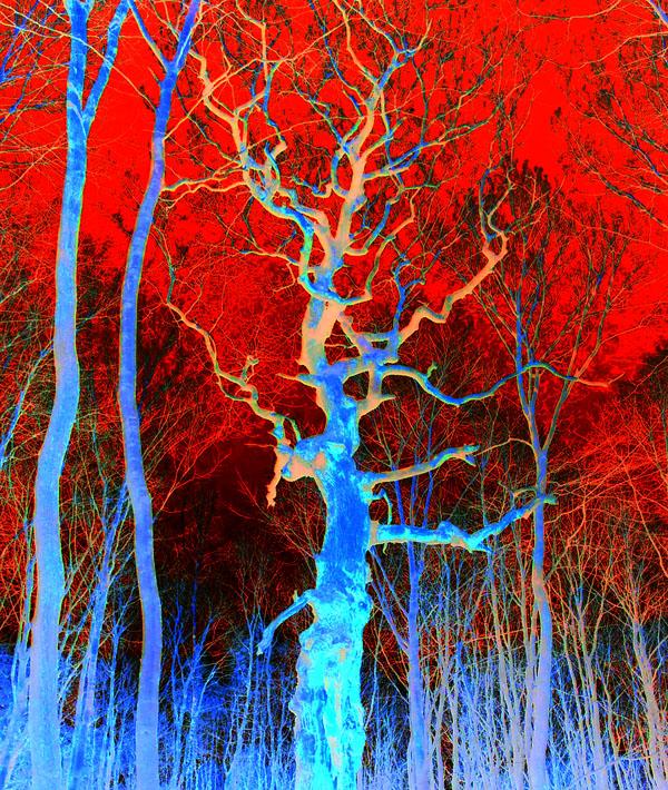 Мертвое древо из мира снов