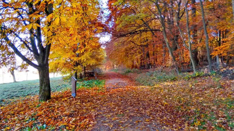 Осень - анабиоз деревьеа