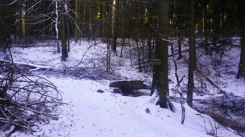ЗИМНИЙ лес у источника