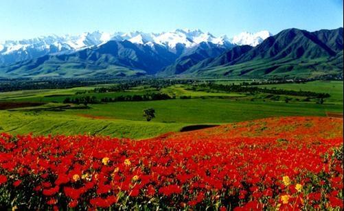 Киргизия. Горы и маки