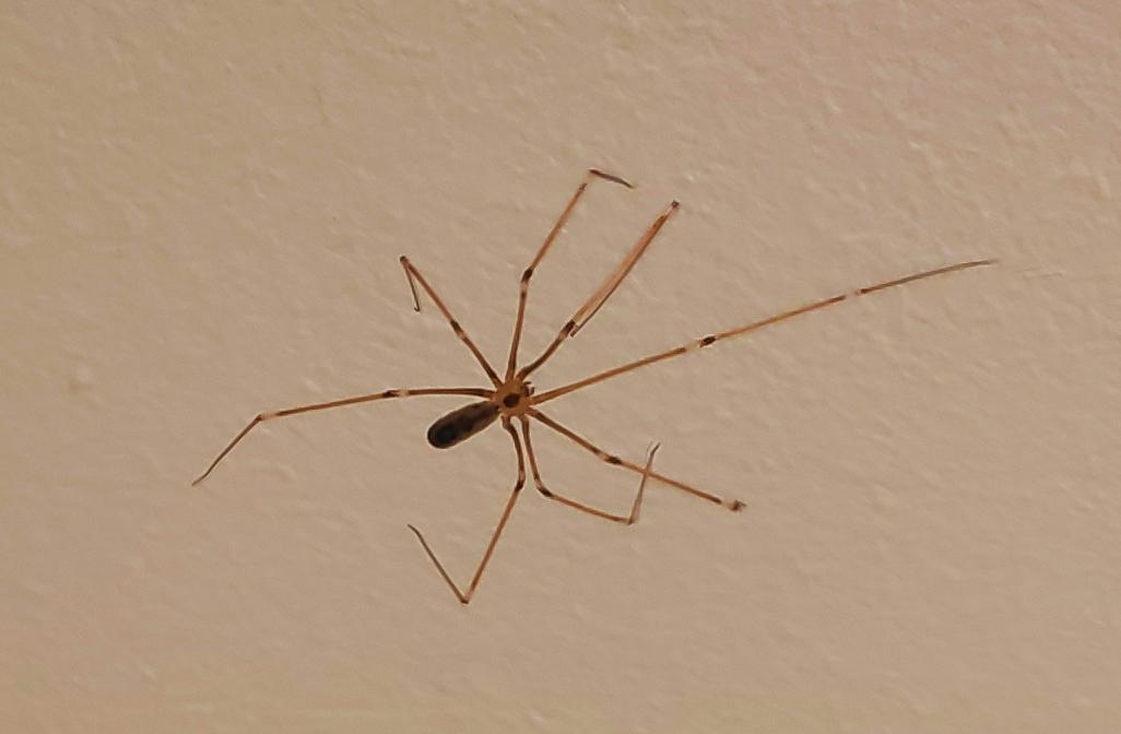 Паучок, живущий в моей ванной комнате